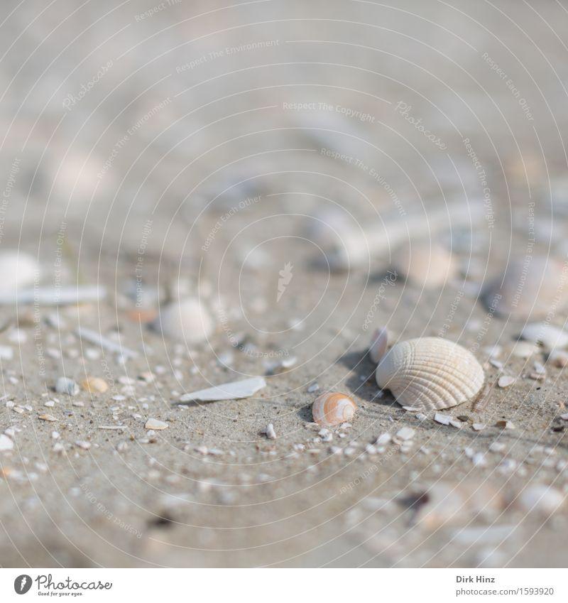Muschelsand Wellness Wohlgefühl Ferien & Urlaub & Reisen Tourismus Ausflug Ferne Freiheit Sommer Sommerurlaub Umwelt Natur Küste Strand Nordsee Ostsee Meer