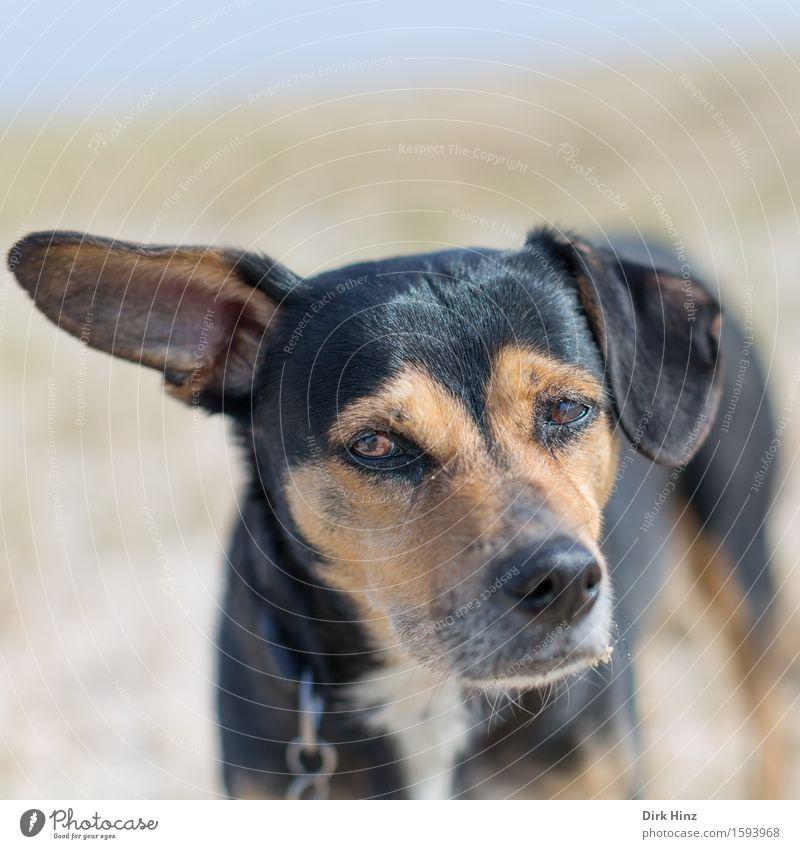Wie bitte? Natur Landschaft Tier Haustier Hund 1 Gefühle Stimmung Traurigkeit Müdigkeit Enttäuschung Angst Misstrauen Schnauze Ohr Fell angeleint warten trüb