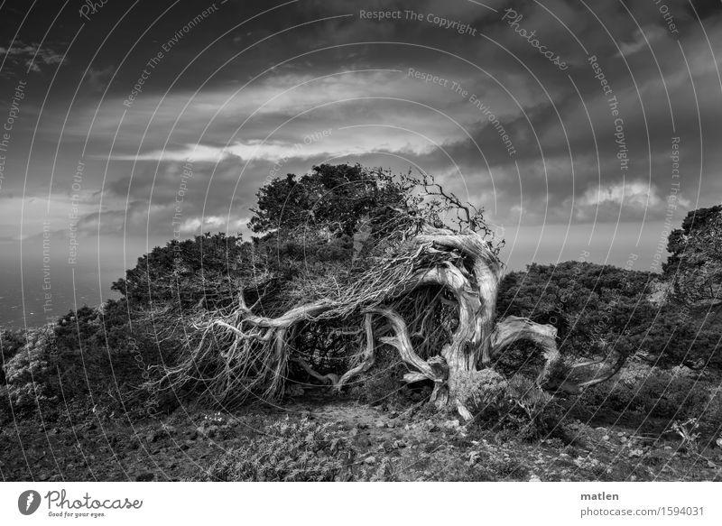 resistance Himmel Natur alt Pflanze Wasser weiß Baum Meer Landschaft Wolken schwarz Wiese Gras Horizont Wetter Luft