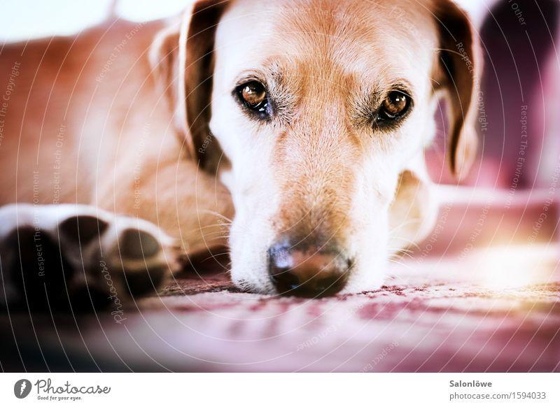 Seelenhund - Hundeseele Tier Haustier Tiergesicht Pfote 1 Erholung liegen träumen Traurigkeit kuschlig mehrfarbig violett Zufriedenheit Vertrauen Langeweile