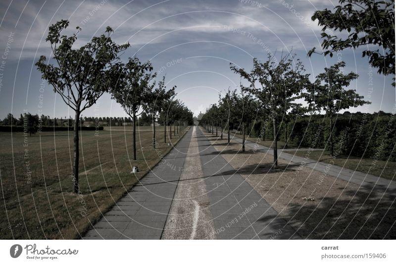 Allee Allee Linie gerade Klarheit deutlich streng kalt Reihe Baum Geometrie Ordnung Park Wiese strikt geordnet
