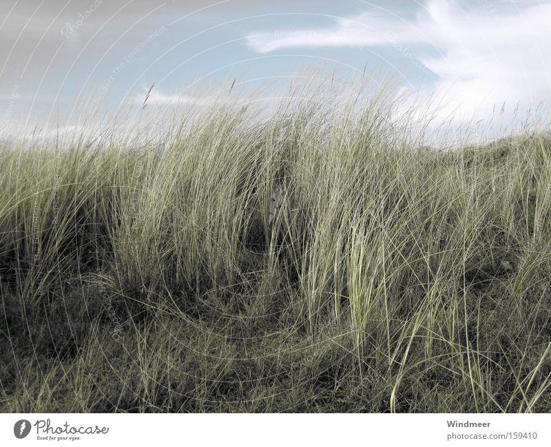im Nordseewind Strand Meer Landschaft Pflanze Himmel Wolken Wind Gras Küste natürlich Stranddüne Niederlande trüb Walcheren Düne Gedeckte Farben Außenaufnahme