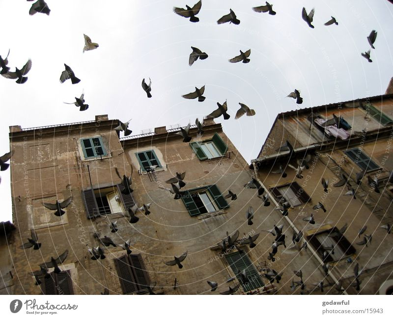 geflatter Vogel Fassade Europa Italien Rom Altbau flattern