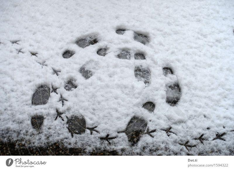 Kreisverkehr Winter Schnee Fährte gehen wandern kalt lustig rund Bewegung Fußspur Vogelspur Farbfoto Gedeckte Farben Außenaufnahme Menschenleer