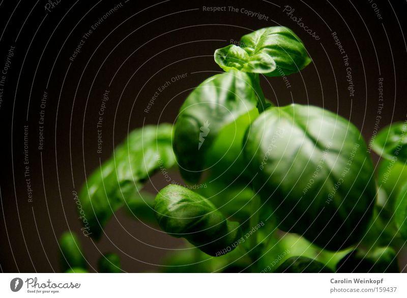 Küchenkraut. grün Pflanze Blatt schwarz Lebensmittel Gesundheit frisch gut einfach Kochen & Garen & Backen Kräuter & Gewürze lecker Grünpflanze Blattadern