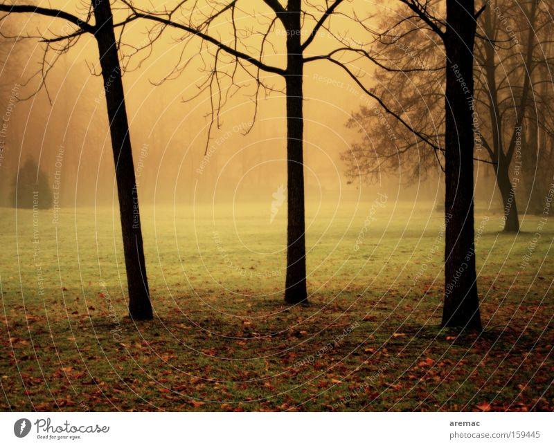 Bäume im Nebel Natur Baum Farbe Herbst Gras Park Landschaft Stimmung