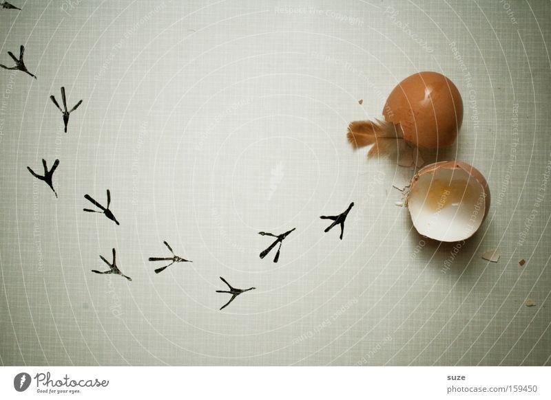 Abgefederter Eierlauf Bioprodukte Vegetarische Ernährung Diät Fasten Leben frisch neu Beginn Küken Spuren Feder Hühnerei Geburt Lebenslauf Eierschale Fußspur