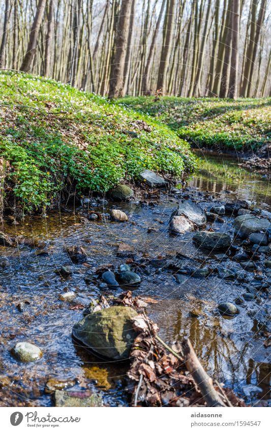 gespensterwald Natur Landschaft Pflanze Wasser Frühling Wald Bach Freude Zufriedenheit Vorsicht Gelassenheit geduldig ruhig Farbfoto mehrfarbig Menschenleer Tag