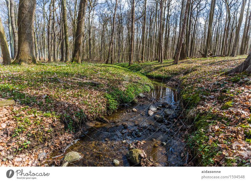 gespensterwald Natur Landschaft ruhig Wald Zufriedenheit Gelassenheit Vorsicht geduldig
