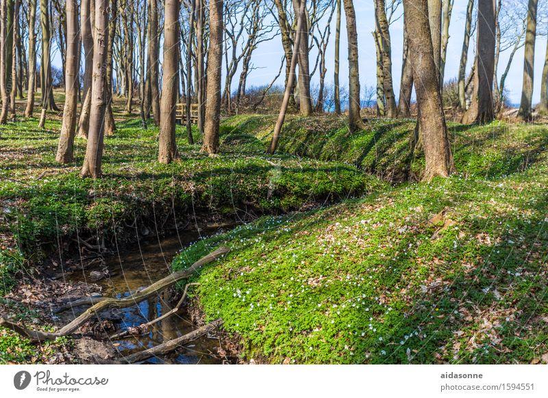 Gespensterwald im Frühling Landschaft Schönes Wetter Wald Bach Zufriedenheit Lebensfreude Frühlingsgefühle achtsam Vorsicht Gelassenheit ruhig Nienhagen Ostsee