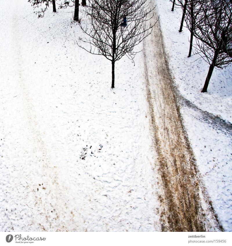 Letzter Schnee Winter Schneedecke Wege & Pfade Fußweg Baum Allee Vogelperspektive Frost Winterdienst Hausmeister Vergänglichkeit Park räumdienst