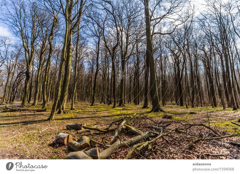 Gespensterwald Natur Landschaft ruhig Wald Frühling Zufriedenheit Schönes Wetter Gelassenheit friedlich Frühlingsgefühle achtsam Gespensterwald Nienhagen