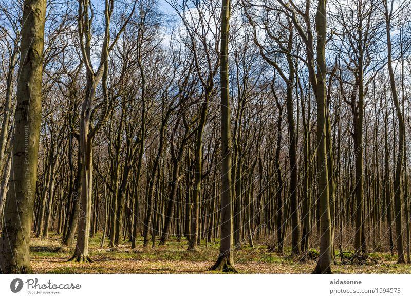 Gespensterwald Landschaft ruhig Wald Frühling Zufriedenheit Schönes Wetter Gelassenheit Vorsicht Frühlingsgefühle achtsam Nienhagen
