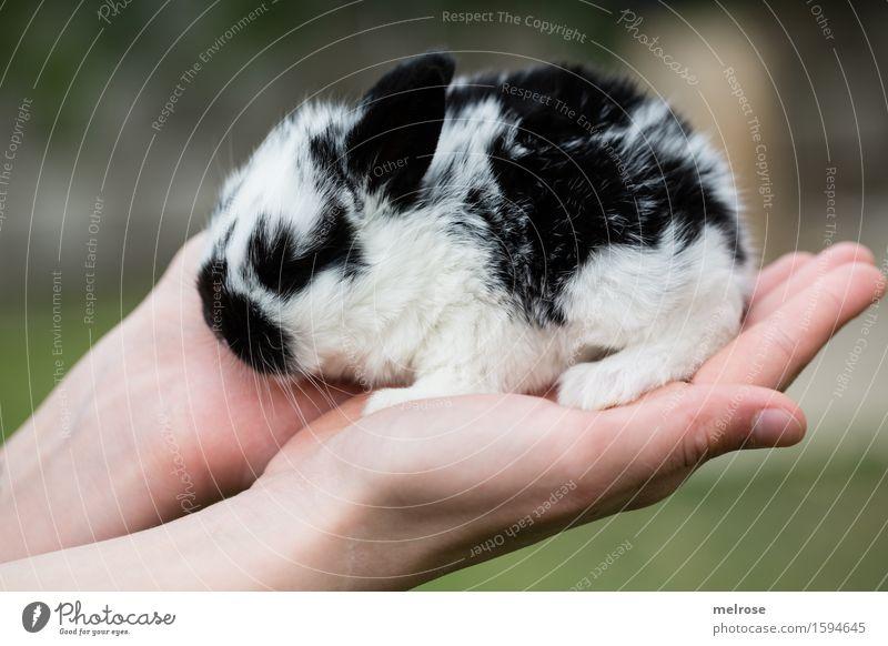 Hand voll Zucker II Mädchen Arme Finger 1 Mensch 8-13 Jahre Kind Kindheit Haustier Tiergesicht Fell Pfote Hasenbaby Zwergkaninchen Hasenlöffel Nagetiere