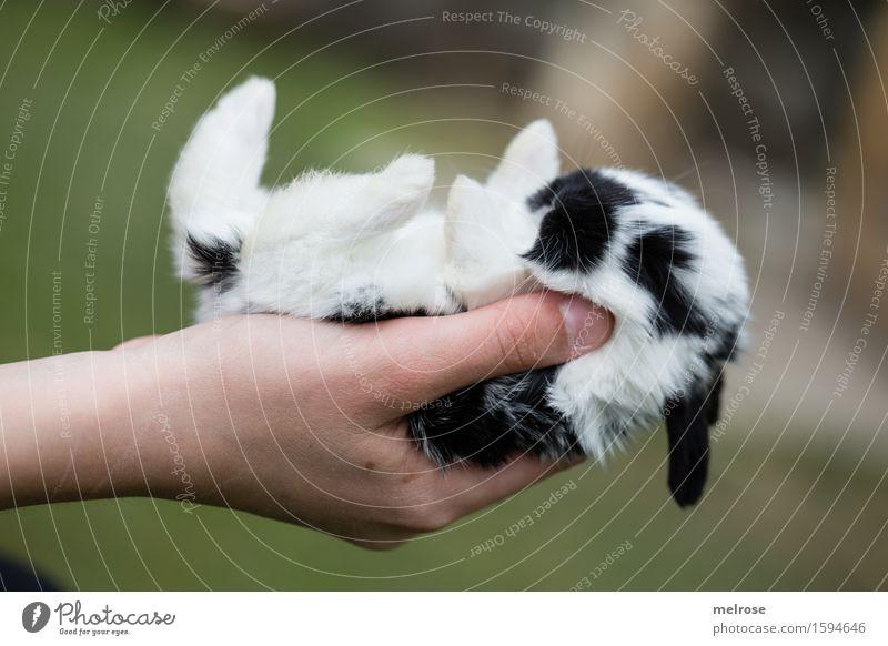so klein ... Mensch Kind grün weiß Hand Erholung Tier Mädchen schwarz Tierjunges Liebe Zufriedenheit Kindheit genießen Finger niedlich