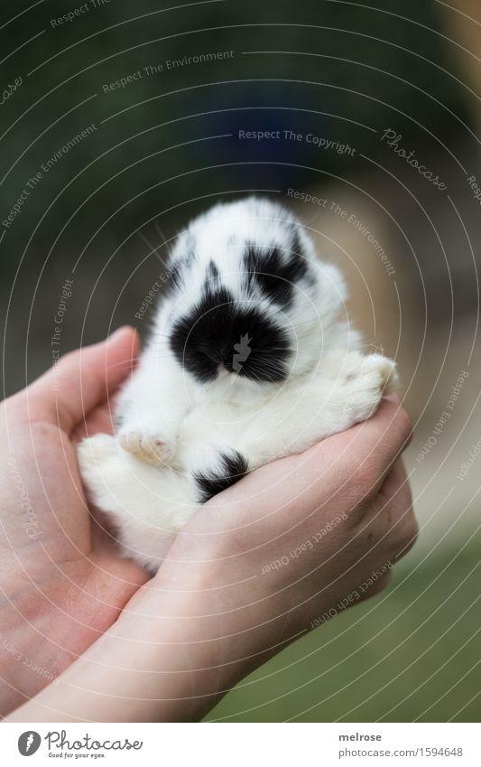 Sitzstreik Mädchen Arme Hand Finger 1 Mensch 8-13 Jahre Kind Kindheit Haustier Tiergesicht Fell Pfote Hasenbaby Zwergkaninchen Nagetiere Säugetier Schnauze