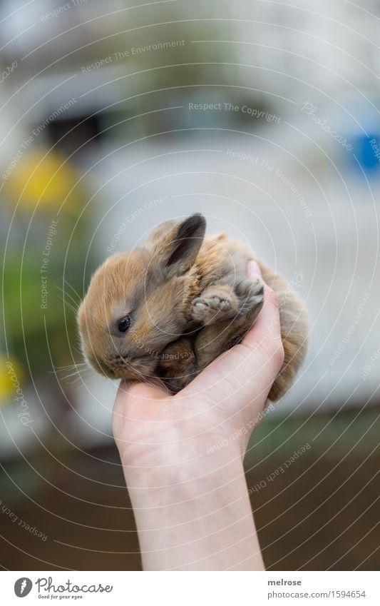 ein neuer Tag ... Mädchen Arme Hand 1 Mensch 8-13 Jahre Kind Kindheit Frühling Blume Garten Haustier Tiergesicht Fell Pfote Zwergkaninchen Hasenbaby Nagetiere