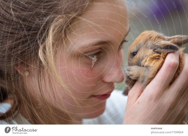 Du du duuuuuuuu ... Mädchen Gesicht Hand Finger 1 Mensch 8-13 Jahre Kind Kindheit Haustier Tiergesicht Fell Pfote Zwergkaninchen Hasenlöffel Nagetier Säugetier