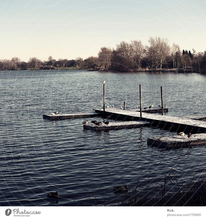 .Von Ruhe erfüllt Wasser Baum Winter ruhig Erholung Herbst Schnee Küste See Park Wasserfahrzeug Eis Zufriedenheit Wellen Ausflug Tourismus