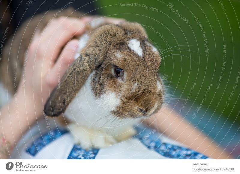 auf Kuschelkurs Mensch Kind grün schön weiß Hand Erholung Tier Mädchen braun Zusammensein Zufriedenheit sitzen Kindheit Arme genießen
