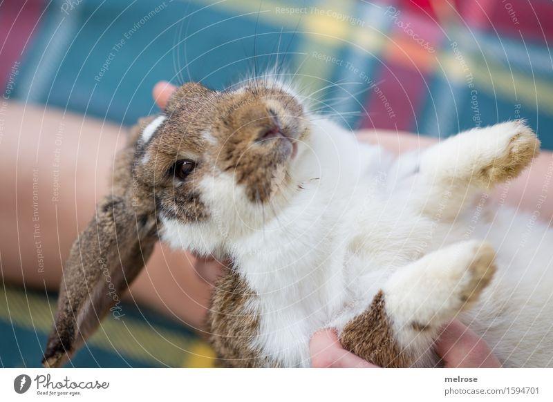 bin wachsam Mädchen Finger Fuß 8-13 Jahre Kind Kindheit Haustier Tiergesicht Fell Pfote Zwergkaninchen Hasenlöffel Schnauze Nagetiere Säugetier Hasenmutti