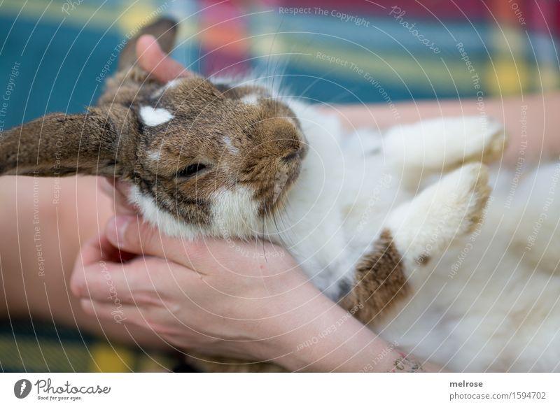 Mittagsschläfchen Mädchen Arme Hand Finger Beine 1 Mensch 8-13 Jahre Kind Kindheit Haustier Tiergesicht Fell Pfote Hasenlöffel Zwergkaninchen Nagetiere