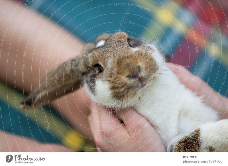auch schon munter? Mädchen Hand Finger Beine 1 Mensch 8-13 Jahre Kind Kindheit Haustier Tiergesicht Zwergkaninchen Widderchen Hasenohren Nagetiere Säugetiere