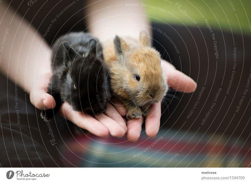 Hasenbabies 12 Tage alt Kind grün Hand Erholung Mädchen schwarz Tierjunges klein braun liegen Zufriedenheit Kindheit genießen Finger niedlich weich