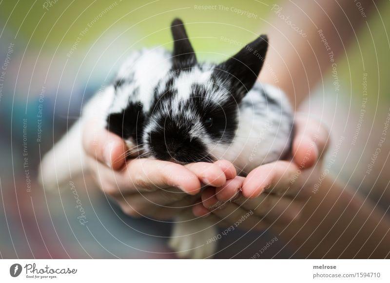 Hasenbabies 12 Tage alt Kind grün weiß Hand Erholung Tier Mädchen schwarz Tierjunges klein liegen Zufriedenheit Kindheit genießen Finger niedlich