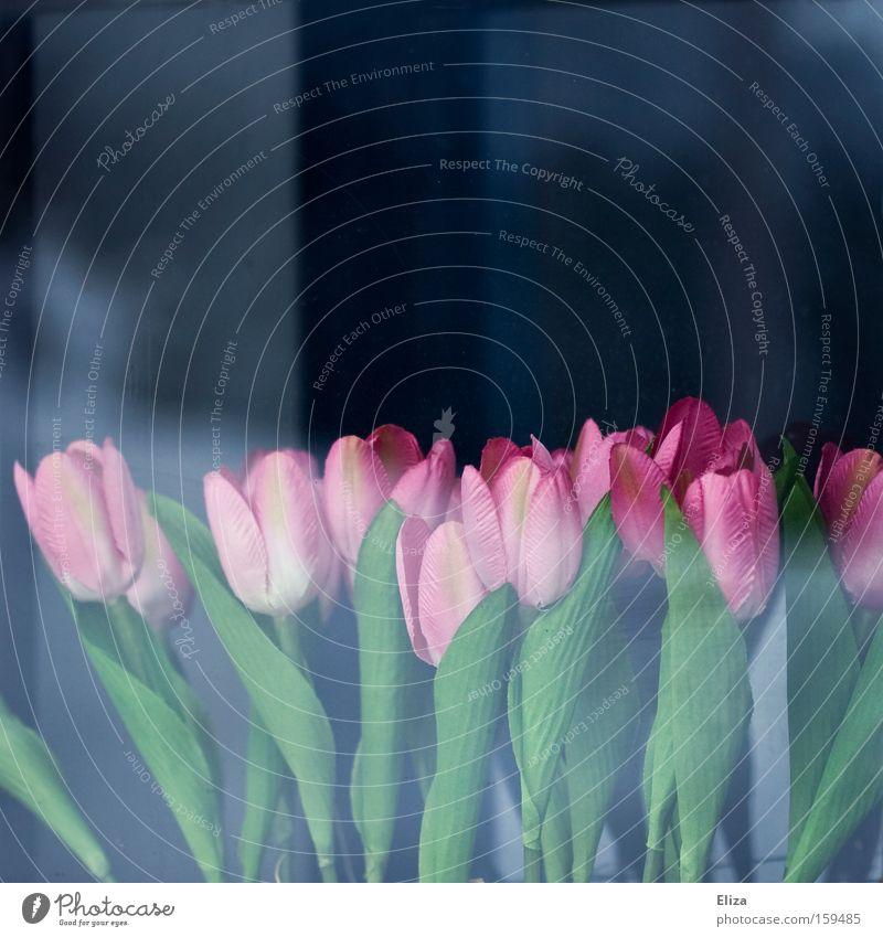künstlich Blume blau Fenster Frühling Garten rosa Glas Dekoration & Verzierung Kunststoff Tulpe falsch