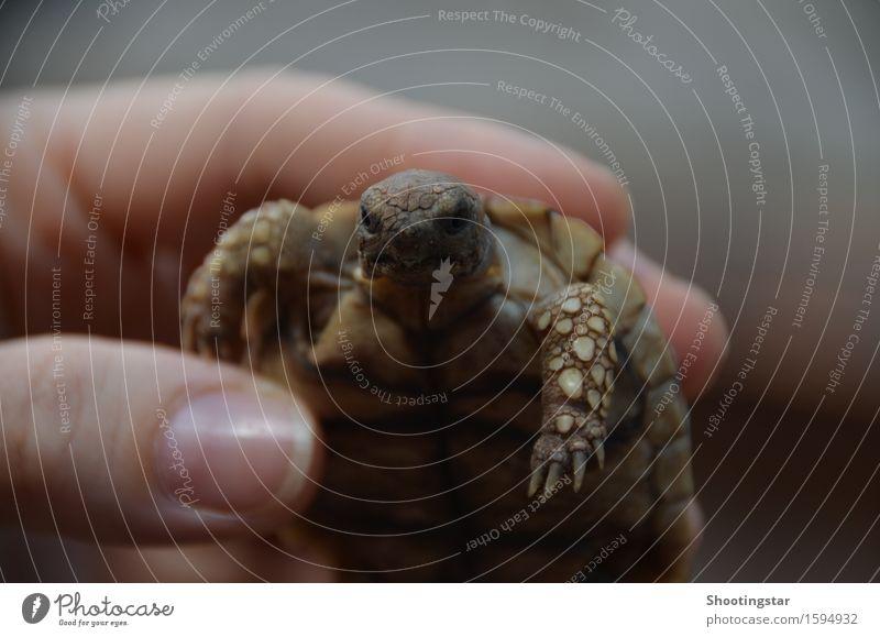 tortoise/ Landschildkröte Tier Senior klein Gelassenheit Haustier Schutzschild Weisheit Krallen langsam Panzer Schildkröte grimmig Streichelzoo