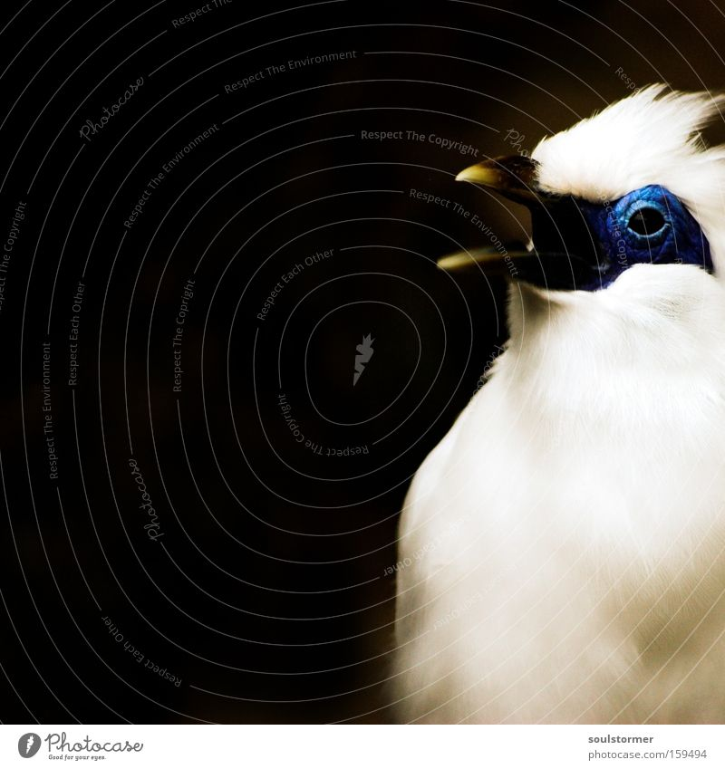 Piepmatz // der Frühling kommt! Natur weiß schwarz Auge Ernährung sprechen Lebensmittel klein Vogel fliegen Luftverkehr Trauer Gier Tier Makroaufnahme
