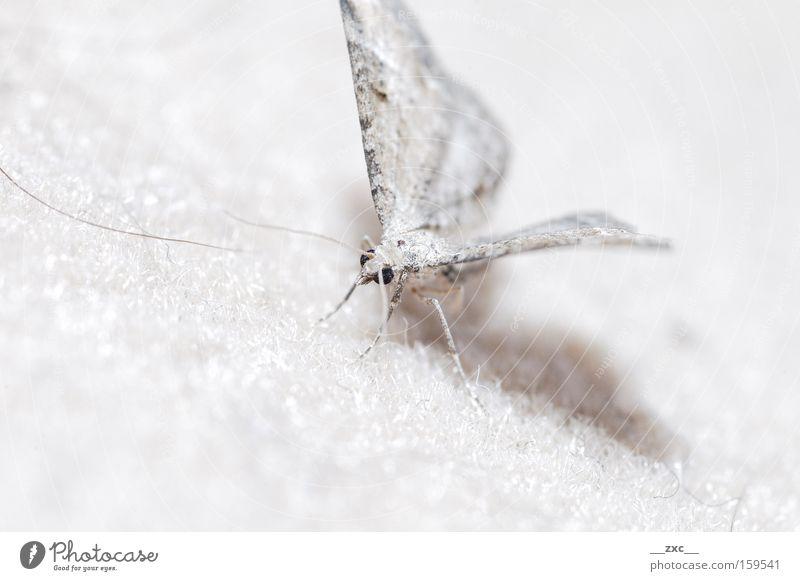 Natur schön weiß Bewegung elegant fliegen Insekt Schmetterling Tier