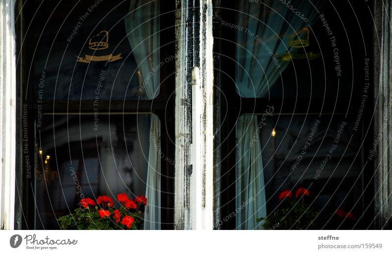 Fensterplatz Blume Fenster dunkel Gefühle Traurigkeit Häusliches Leben trist Italien Vorhang Gardine Venedig