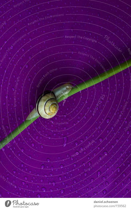 langsam geht`s bergauf Wasser grün Haus Farbe Bewegung Frühling Regen Wassertropfen Tropfen violett Schnecke