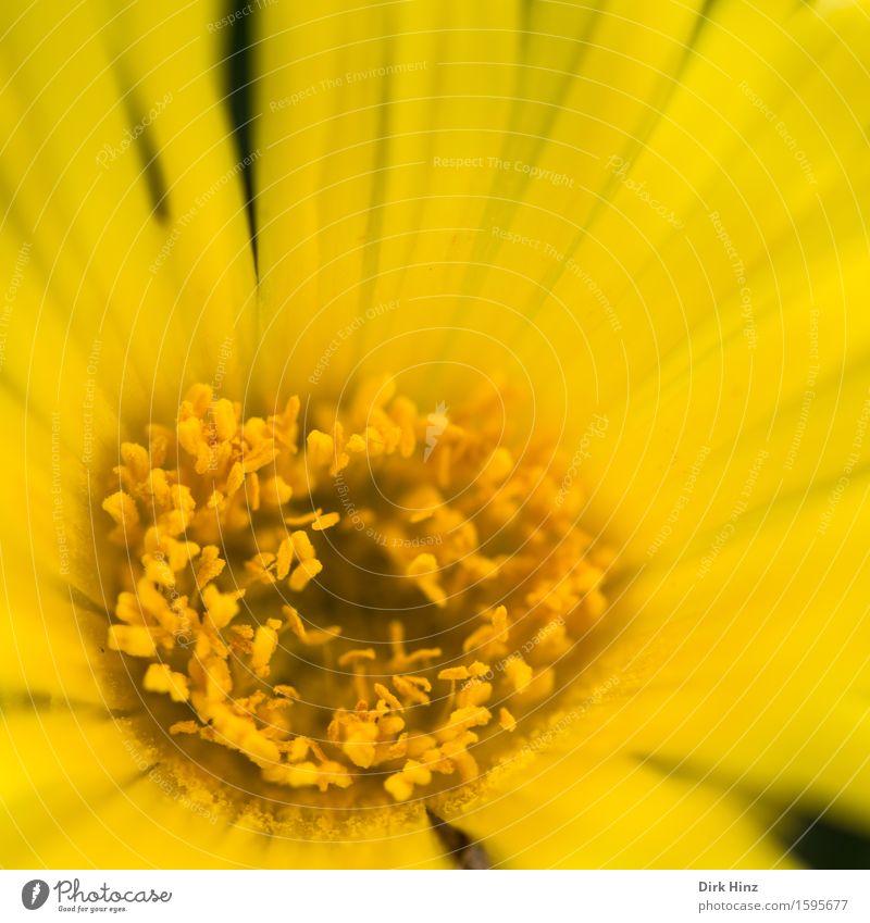 Bienenoase elegant Stil Garten Dekoration & Verzierung Umwelt Natur Pflanze Frühling Sommer Blume Blüte Topfpflanze Park gelb Gefühle Gesundheit Hoffnung