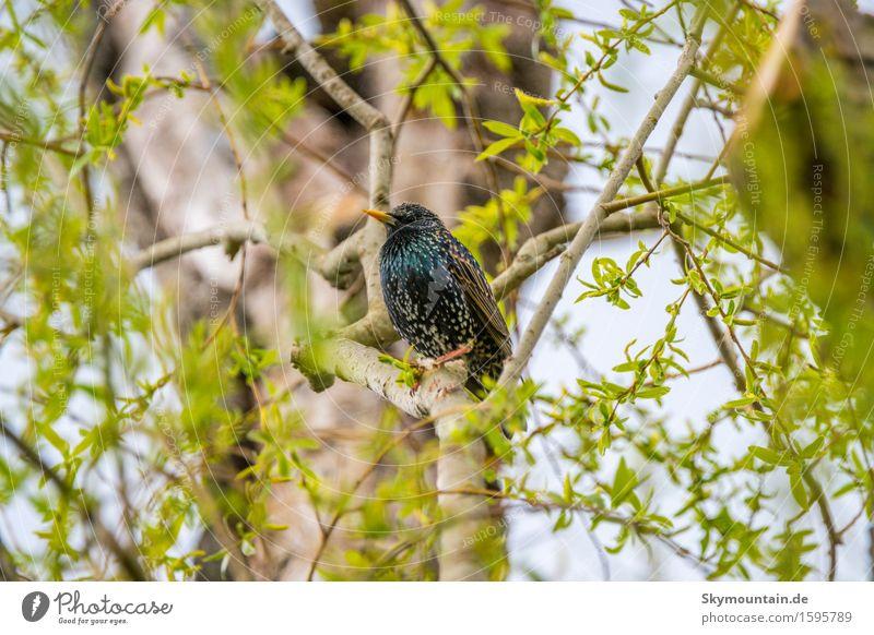 Star des Tages Umwelt Natur Landschaft Pflanze Tier Frühling Sommer Klima Wetter Baum Blatt Wildtier Vogel Tiergesicht Flügel 1 blau braun gelb gold grau grün