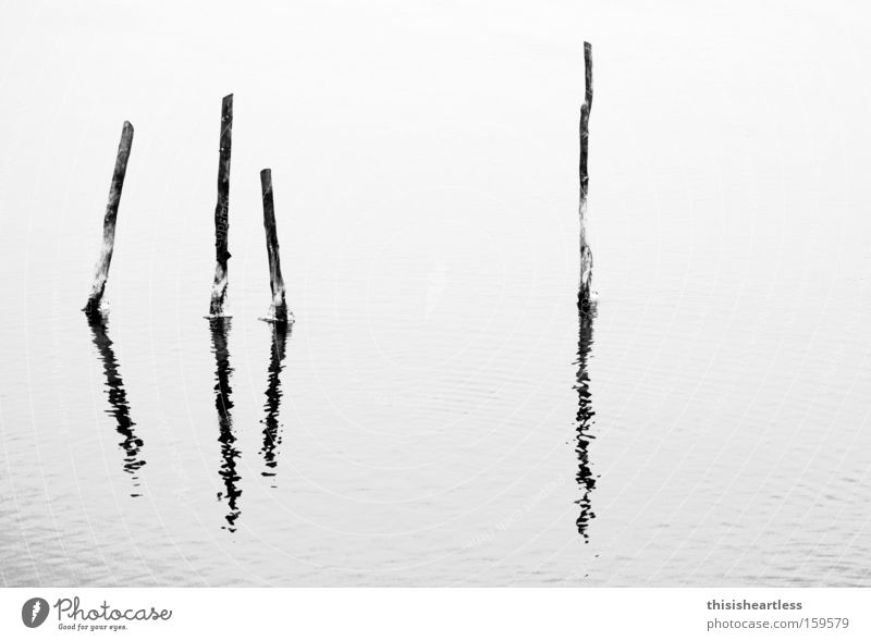 Viererkette Wasser Meer Winter ruhig Einsamkeit Hafen fest Bucht Steg Pfosten Fischereiwirtschaft ankern Holz Holzpfahl seicht herzlos