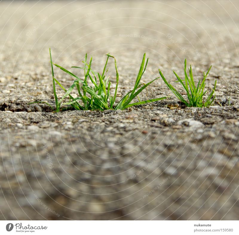 we can do grün Sommer Straße Wiese Gras grau Wege & Pfade Kraft Beton Asphalt Wunsch stark Pflanze einrichten Gletscherspalte