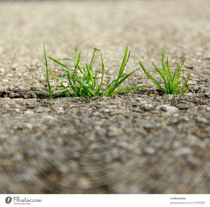 we can do Wiese Gras grün Gletscherspalte Asphalt Wege & Pfade Straße Beton grau Sommer Kraft Wunsch einrichten stark nerven