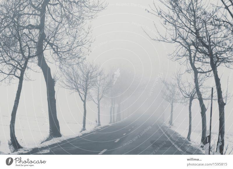 Winterstille Menschenleere Straße im Nebel Schnee Baum Allee kalt kahl Mittelstreifen grau