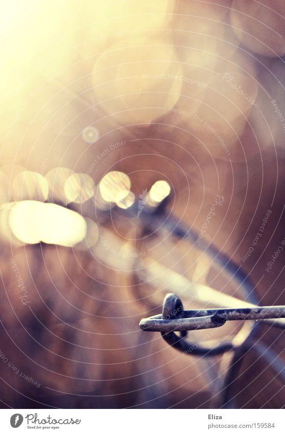 In weiter Ferne lauter Licht.. schön Sonne Herbst Metall hell Stimmung rosa glänzend ästhetisch kaputt Romantik Zaun Neigung Licht Makroaufnahme Maschendraht