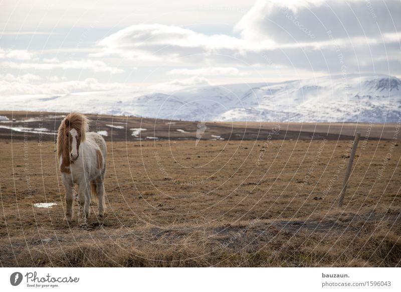 uwe. Himmel Natur Ferien & Urlaub & Reisen Landschaft Wolken Tier Ferne Winter Berge u. Gebirge Umwelt Wiese Gras Schnee Freiheit Tourismus Wetter
