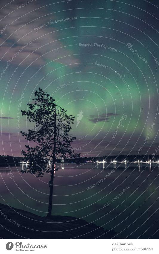 aurora.111 ruhig Abenteuer Winter Natur Wasser Himmel Wolkenloser Himmel Stern Horizont Herbst Baum Seeufer Fjord Umea Menschenleer Euphorie Überraschung