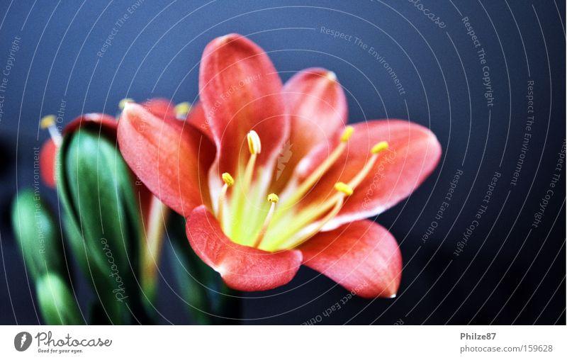 blooming metal Natur Pflanze Sommer Blume Freude Frühling Blüte Metall glänzend Dekoration & Verzierung Blühend Blütenblatt Tulpe Pollen