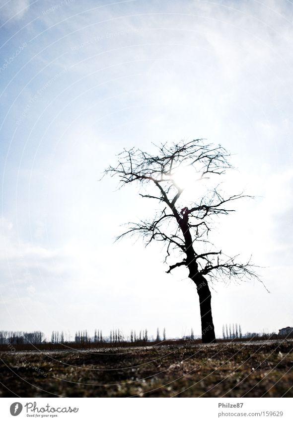 shining tree Himmel Natur Baum Pflanze Sonne Einsamkeit ruhig Ferne Freiheit Feld Freizeit & Hobby Boden Ast Zweig