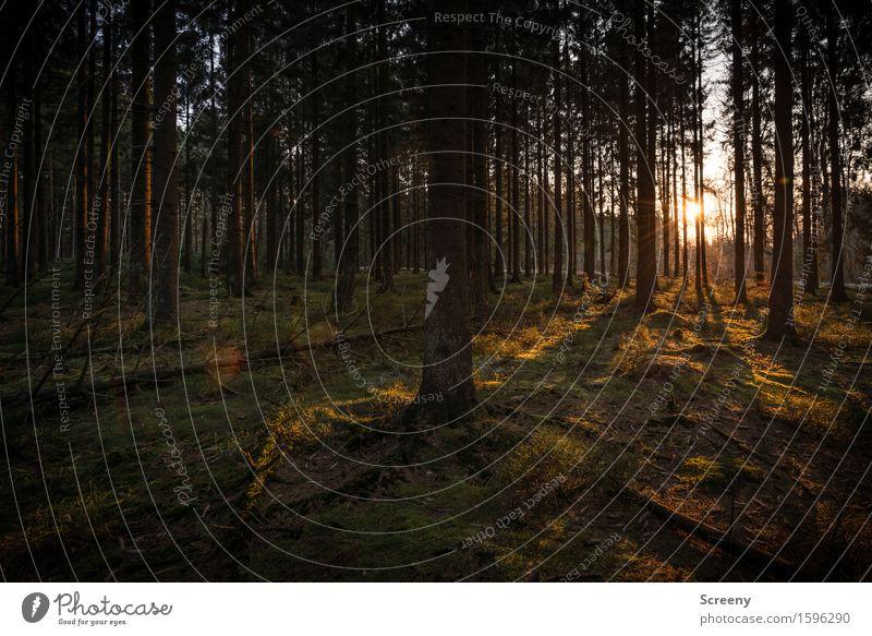 Gleich ist Feierabend... Natur Landschaft Pflanze Sonne Sonnenaufgang Sonnenuntergang Sonnenlicht Frühling Schönes Wetter Baum Gras Sträucher Moos Wildpflanze