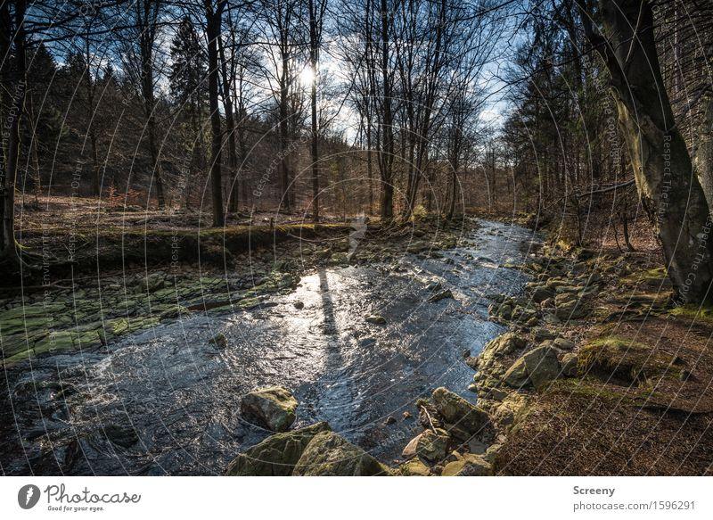 Das Leben ist ein langer ruhiger Fluss... Natur Landschaft Pflanze Wasser Himmel Sonne Sonnenlicht Frühling Schönes Wetter Baum Gras Sträucher Wald Flussufer
