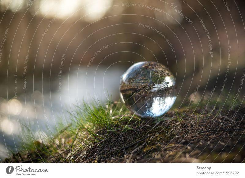 Nah am Wasser... Natur Landschaft Pflanze Erde Frühling Gras Wald Flussufer rund braun grün Gelassenheit geduldig ruhig Kristallkugel Glaskugel Hohes Venn