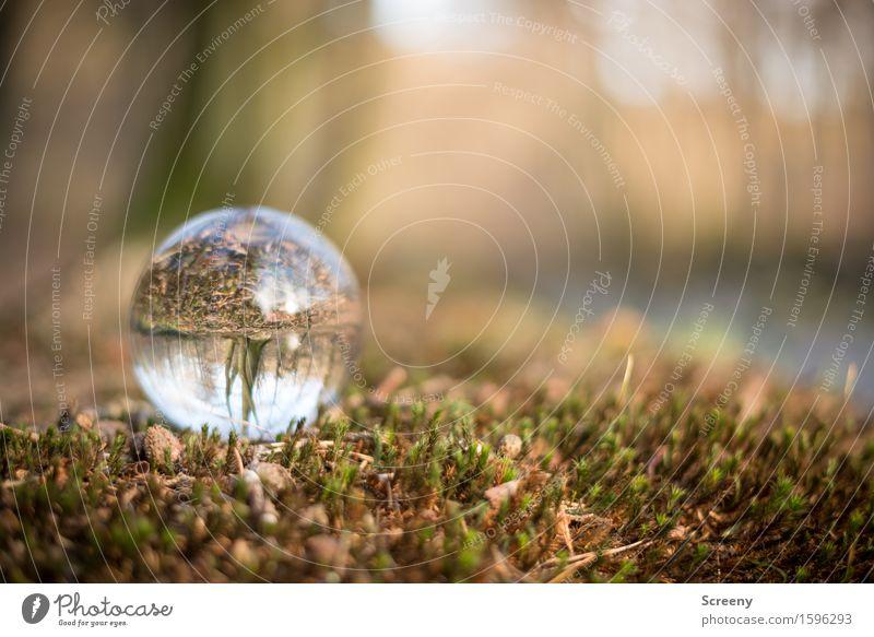 Uferlage Natur Landschaft Pflanze Gras Moos Wald Flussufer rund braun grün Gelassenheit geduldig ruhig Kristallkugel Glaskugel Hohes Venn Farbfoto Außenaufnahme